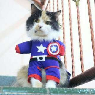 Captain America Cat Fashion