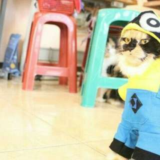Minion Cat Fashion