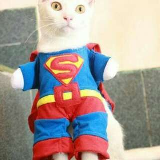 Superman Cat Fashion