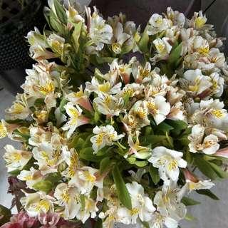 Flowers (stem)