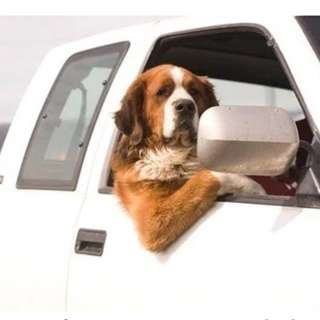 Pet taxi/ transport