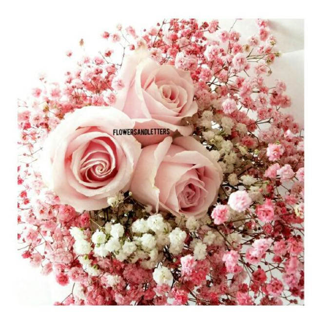 3 stalks of pink roses wraps with white and pink babys breath 3 stalks of pink roses wraps with white and pink babys breath flower bouquet gardening on carousell mightylinksfo