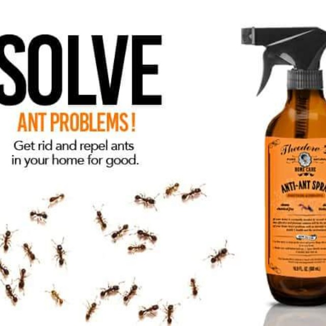Theodore's Natural Ant Spray