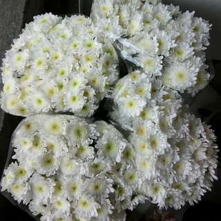 Real Flowers White (per stem)