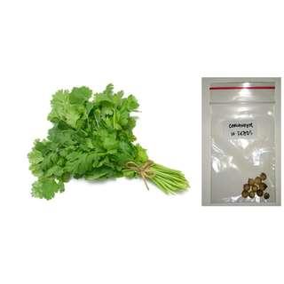 Coriander Herb Seeds (Wansoy or Cilantro)