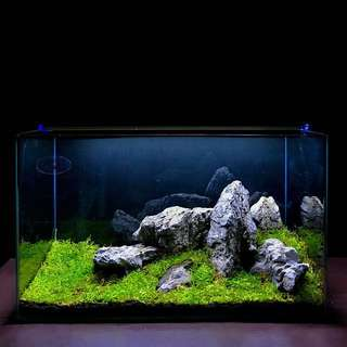 Fish Tank [Reserved]