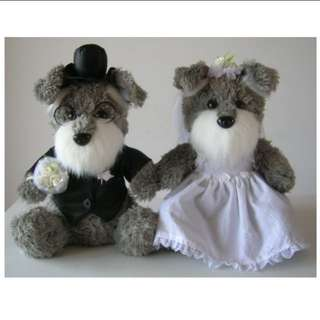 Valentine, Proposal, Wedding Schnauzer Dog