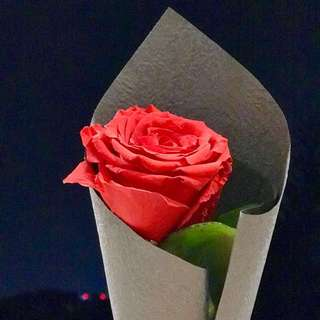 Single stock Rose
