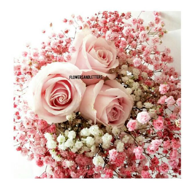 Pink roses wraps with white and pink babys breath flower bouquet photo photo photo photo mightylinksfo