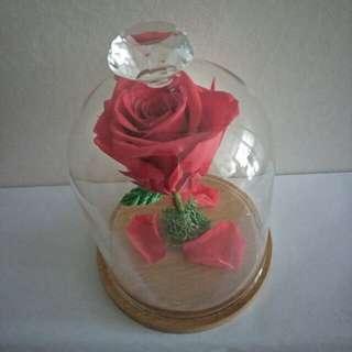 Single Stalk Red Rose