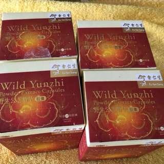 Wild Yunzhi Powder Extract Capsule