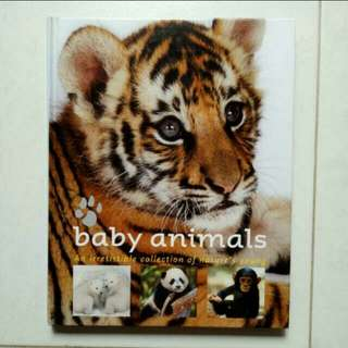 All about Baby Animals/Information Book