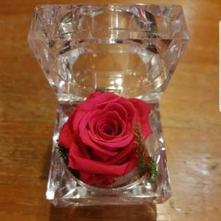 Preserved Rose (Passionate red, hot pink, champagne)