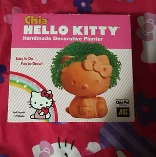 Chia Hello kitty plant
