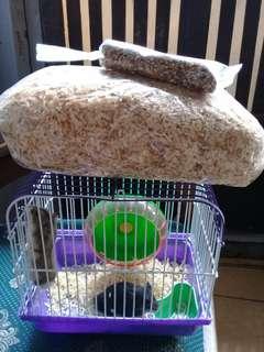 Hamster campbell dewasa sepaket