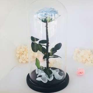 Valentine's Rose | Preserved Rose | Enchanted Rose