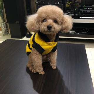 Bumblebee Suit For Small Dogs