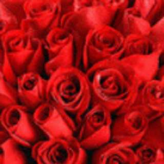 Wholesale stalks of roses