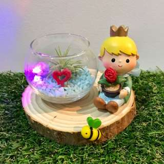 Happy Valentine's Day! Little Prince with LED Lights Air Plant