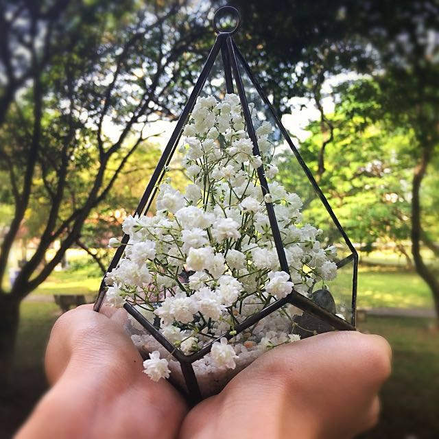 Terrarium Scape Baby Breath Home Furniture Gardening On Carousell