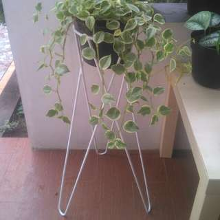 SALE! Cuci gudang Standing planter