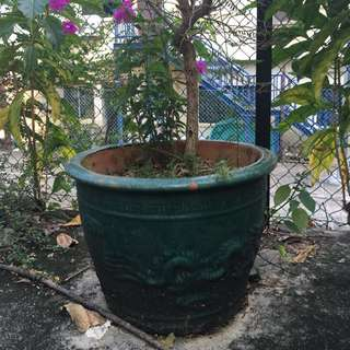 Large Chinese pot with bougainvillea