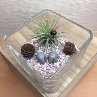 Valentine Airplant Terrarium