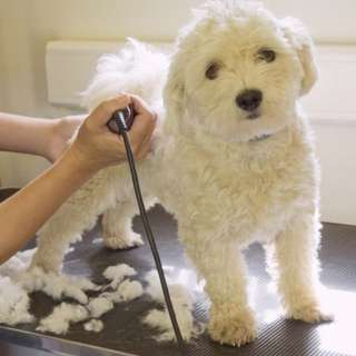 Pets Grooming Promotion
