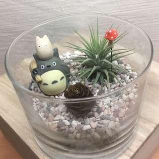 Valentine Totoro Airplant Terrarium