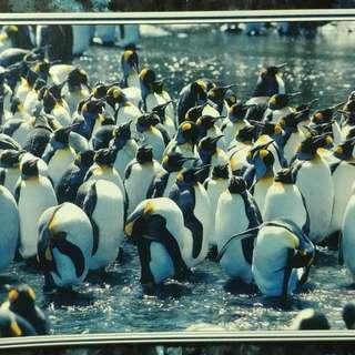 企鵝拼圖 puzzle 750塊 - 內裏包裝袋未開封 !