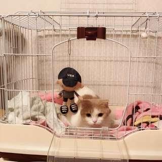 可拆式 實用寵物籠