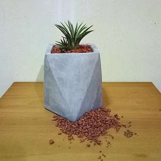 Minimalist geometric planter/flower pot with air plant