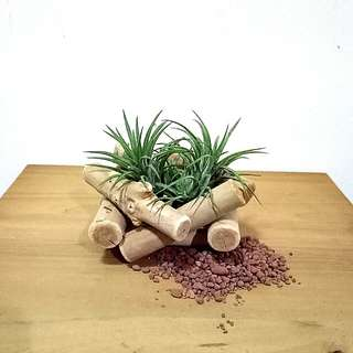 Minimalist wooden basket pile of logs with air plants