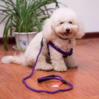 🚚 全新攀岩繩材質拉繩+胸背帶 紫色 L號