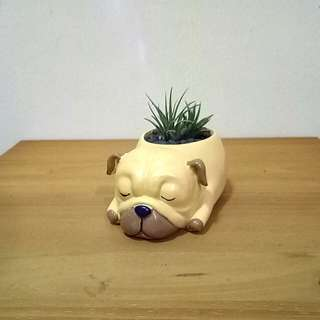 Cute mini dog flower pots/planter with air plants