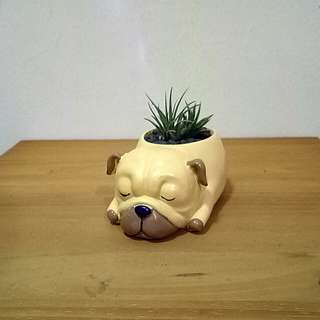 Mini cute dog flower pot/planter with air plant