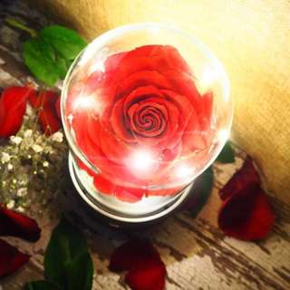 Fully Bloomed Red Preserved Rose w bluetooth music player- Beauty and the Beast