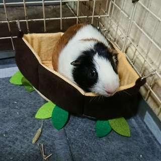 Fleece corner bed for guinea pig / rabbits / chinchilla / small animals