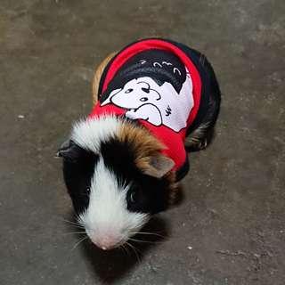 Pet clothing for guinea pig / bunnies
