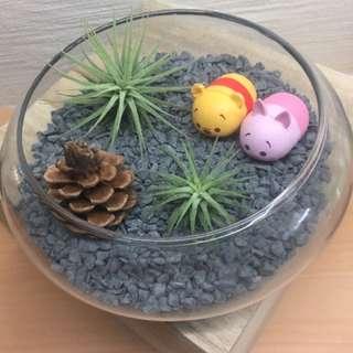 Valentine Tsum Tsum Airplant Terrarium