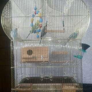 Birds Set All In
