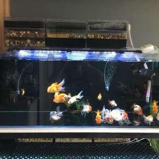 4 feet tank
