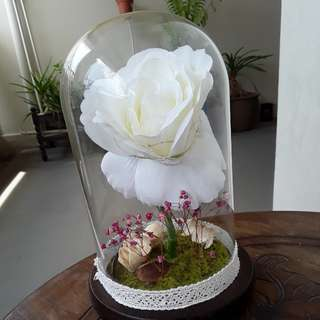 Valentines Eternal rose