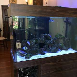 4.5 Marine fish tank fully operating