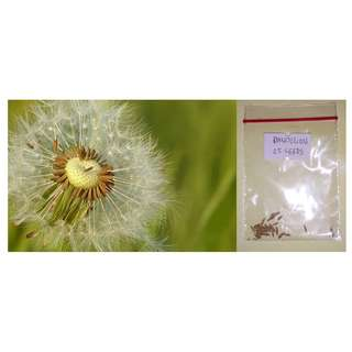 Dandelion Flower Seeds