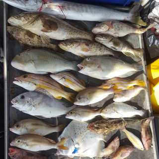 Local Southern Islands Offshore Fishing Trip - 24/02 (Saturday)
