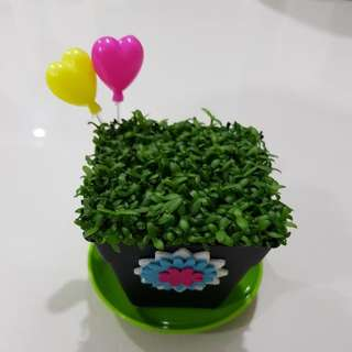 Offer 20% Happy Plant For Office & Gift!