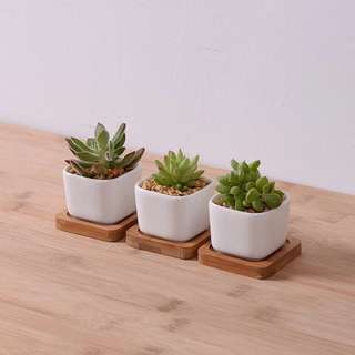 3 Pcs Mini Ceramic Pot with Bamboo Tray