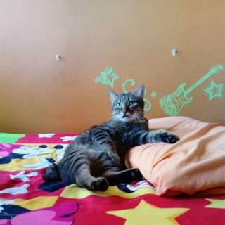 Kucing for adoption
