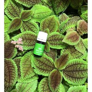 Young Living Essential Oil : Stress Away 15ml (All natural and non-toxic to beat our everyday stress!)